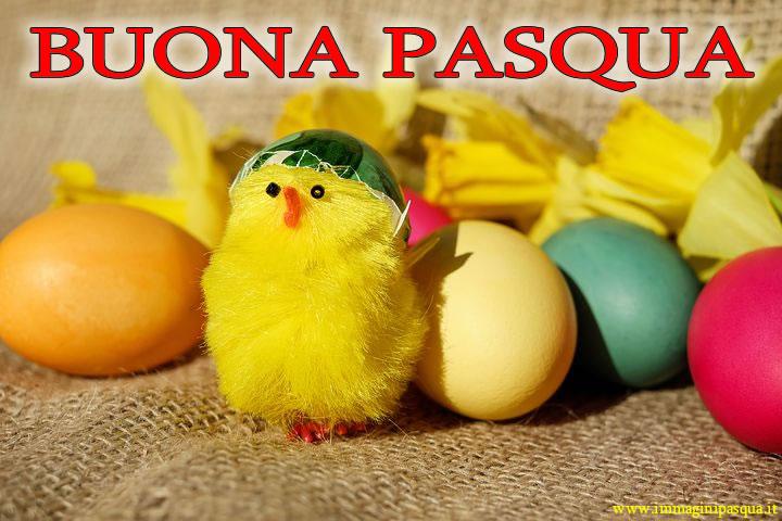 Buona Pasqua pulcino