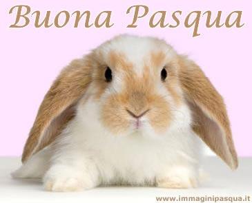 IMMAGINE CONIGLIO BUONA PASQUA