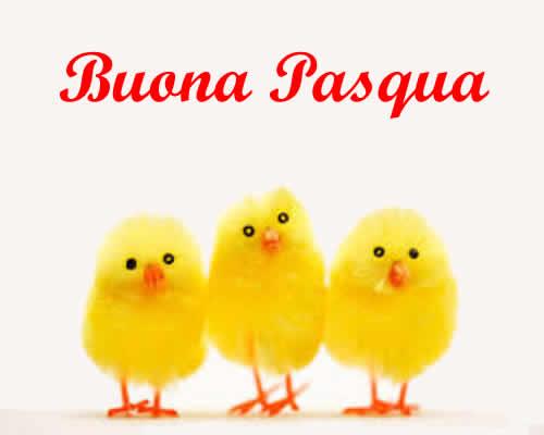 Pulcini Pasqua
